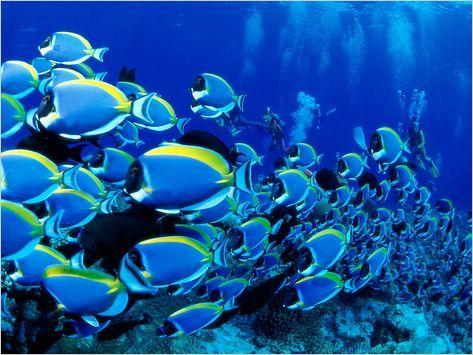 وقتی ماهیهای دریا  دعا میکنند