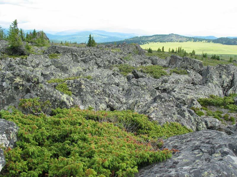 Потепління Арктики перетворює кущі в дерева